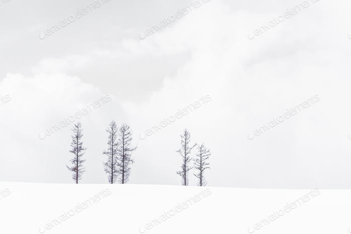 Beautiful landscape of lonely tree branch