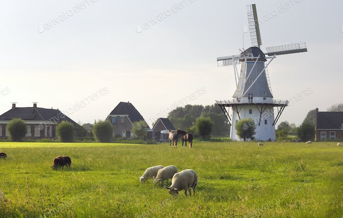 sheep on pasture by windmill in summer