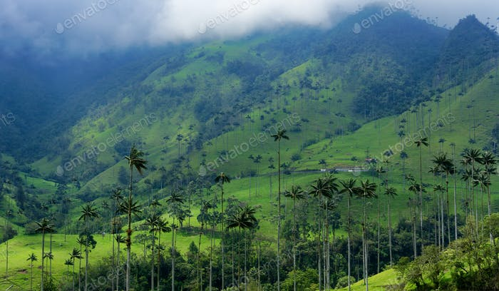 Wax Palm Covered Hills