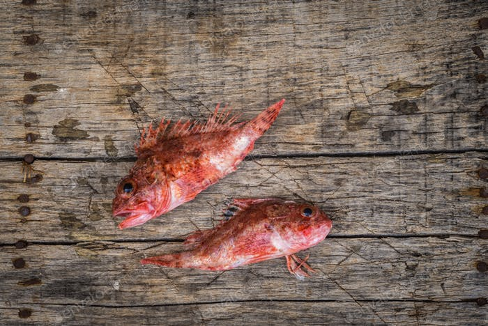 Red mullet raw fish