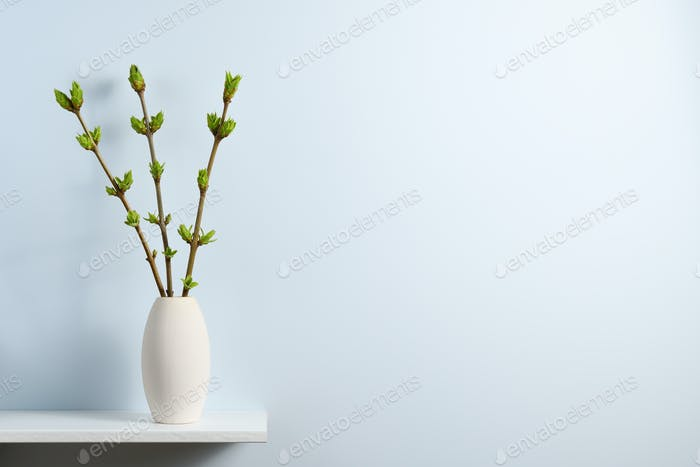 Branches with green spring buds in vase on shelf near blue wall with text space