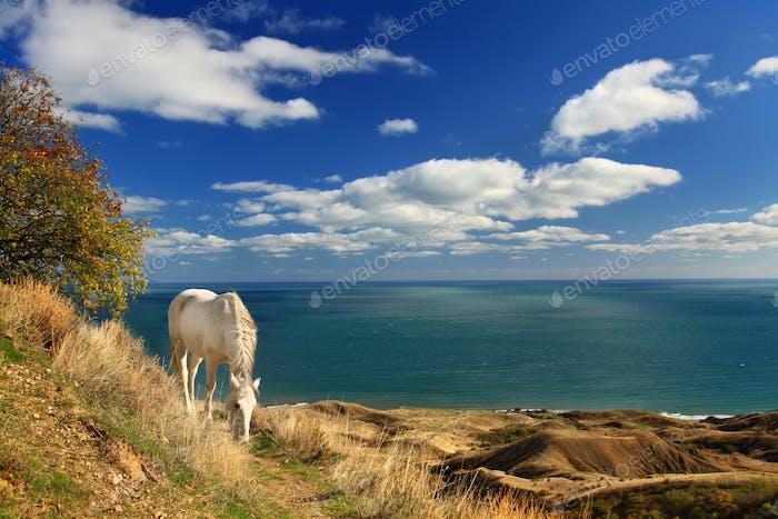 The white horse near the sea