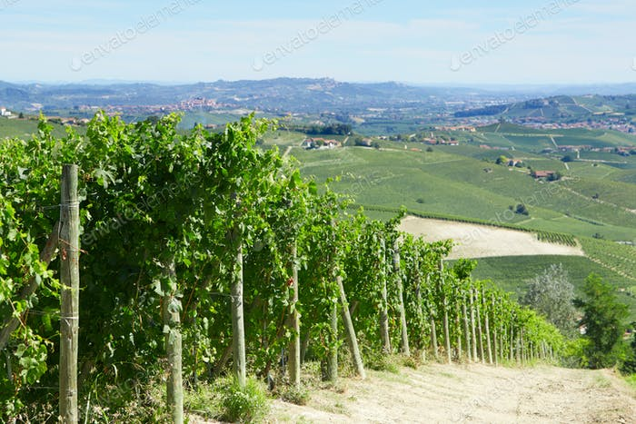 Green vineyards and Italian Langhe hills view in a sunny day