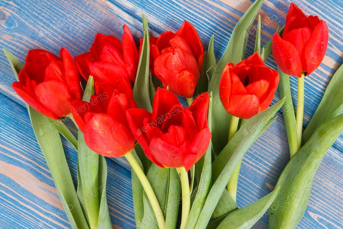 Bouquet of fresh tulips on blue boards, spring decoration