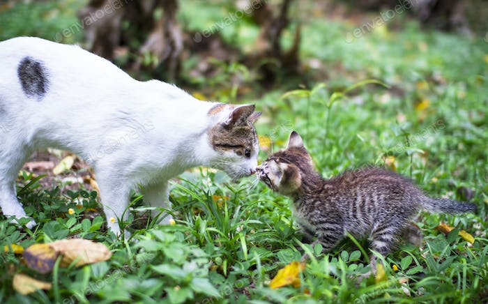 Tabby Kitten Meets an Older White Cat in the Garden