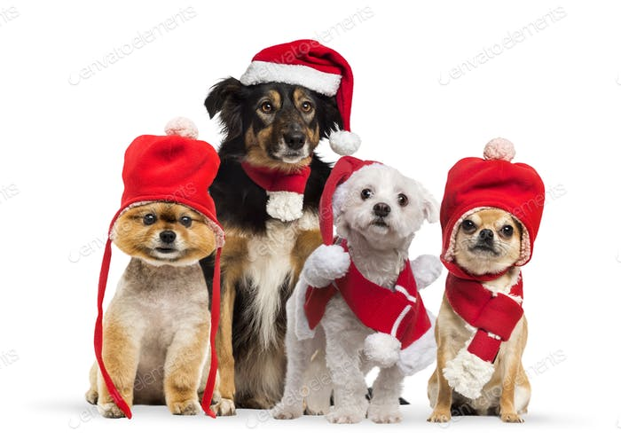Dogs with christmas hat and scarf