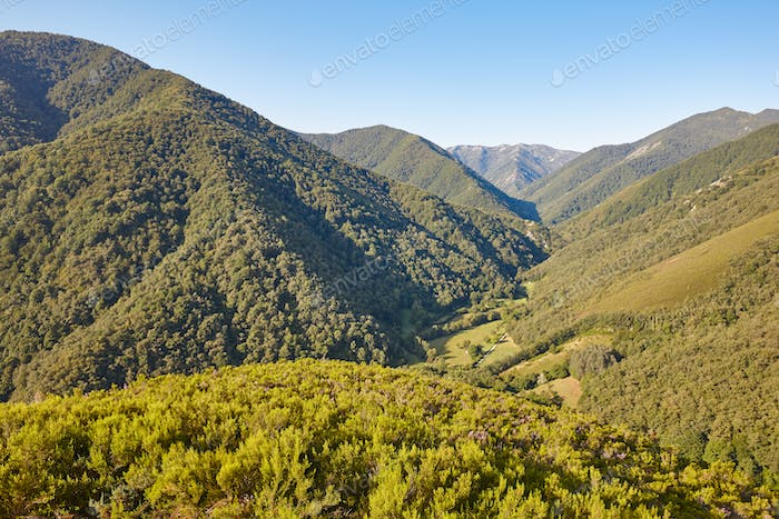 Oak tree forest landscape in Asturias. Muniellos viewpoint. Spain