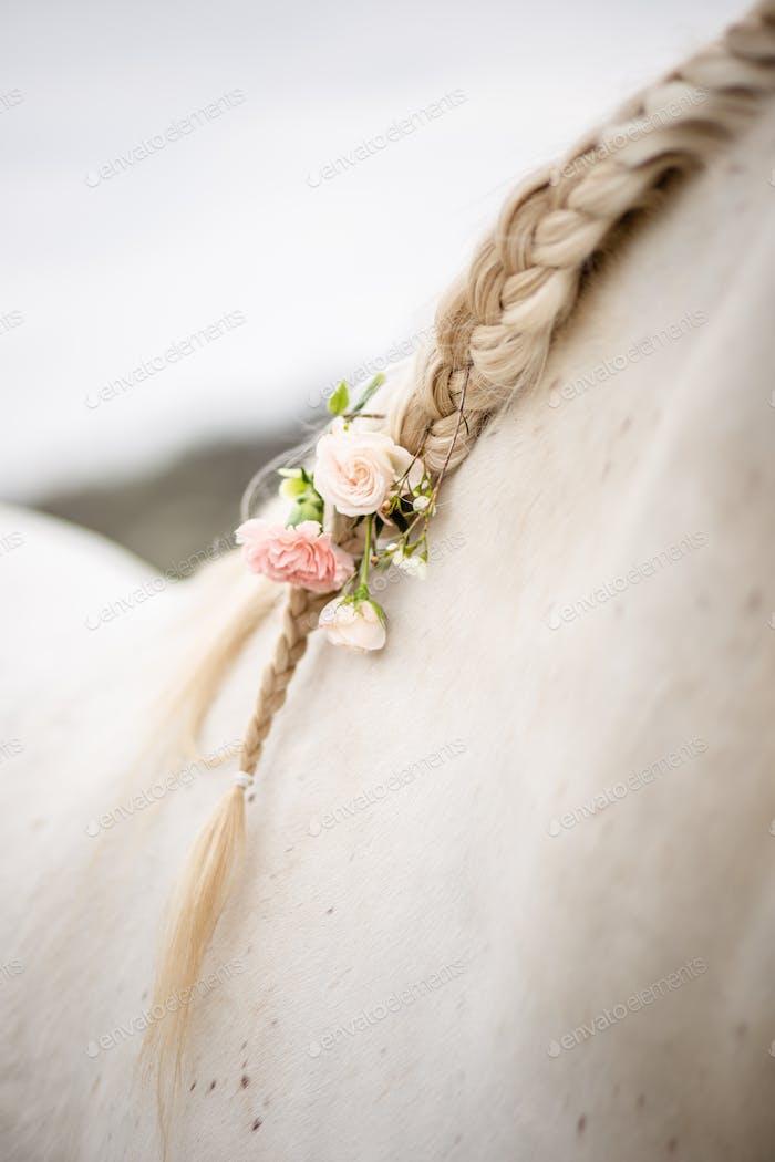 Horse hair - Beautiful decoration