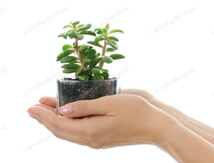 Hands with succulent