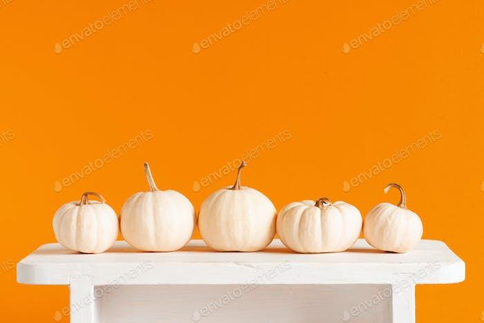 Fresh Autumn Pumpkins on the White Table