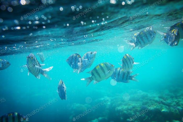Fisch unter Wasser