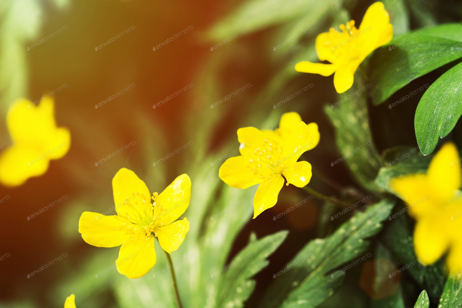 Yellow Flowers In The Wild Photo By Ollinka On Envato Elements