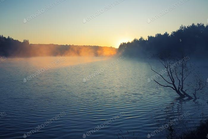 Einsamer Baum wächst in einem Teich bei Sonnenaufgang