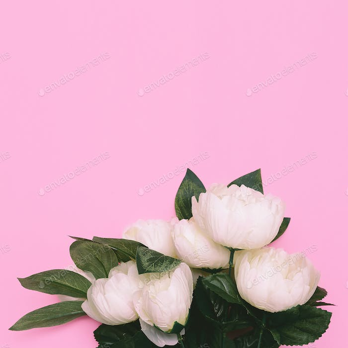 White Roses on pink Minimal Art Design