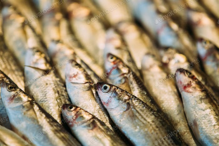 Fresh Sprat Fish On Display On Ice On Market Store Shop. Seafood