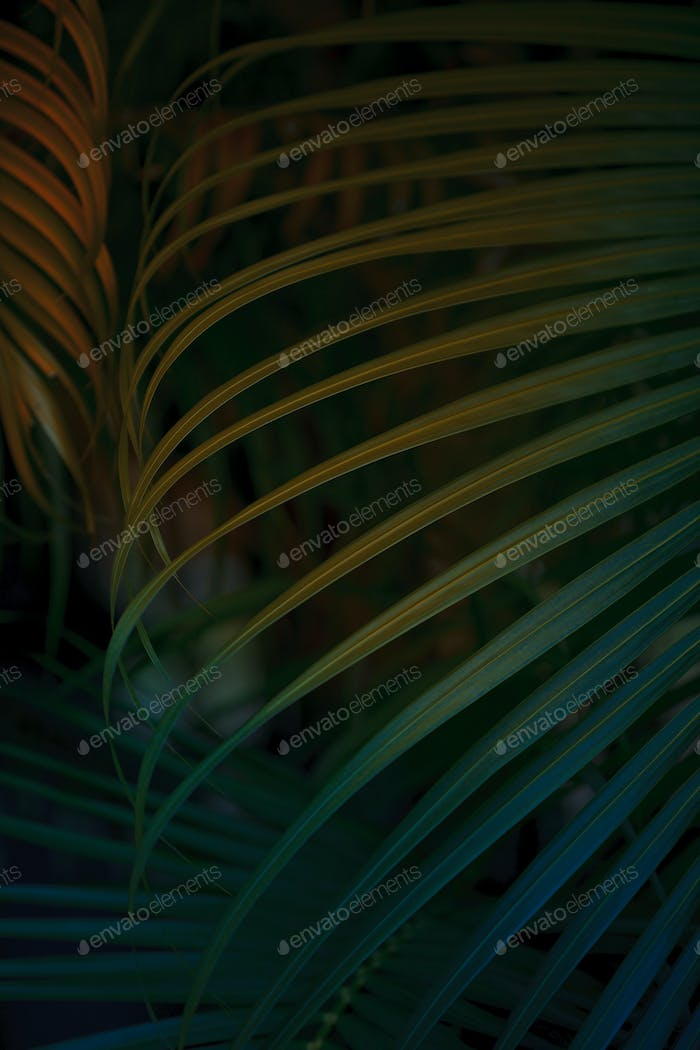 Tropical Palm leaf background.