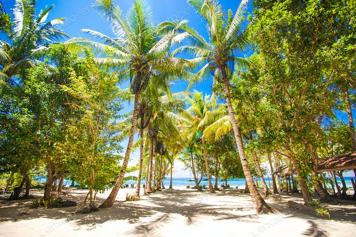 Tropical sunny beach in beautiful exotic resort