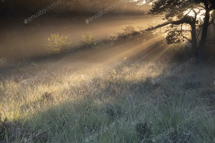 beautiful sunrise rays in forest