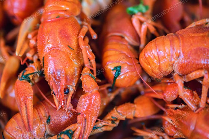 Crayfish cooked with salt and dill