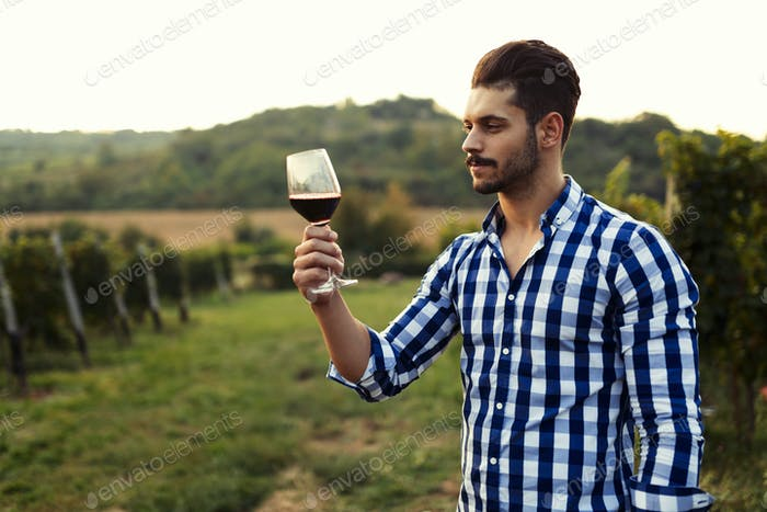 Young handsome man drinking wine in vineyard