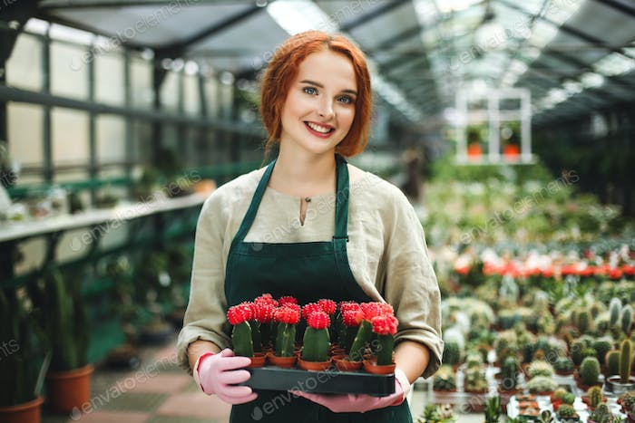 Pretty smiling florist in apron and pink gloves holding tray with little cactus flowers in pots