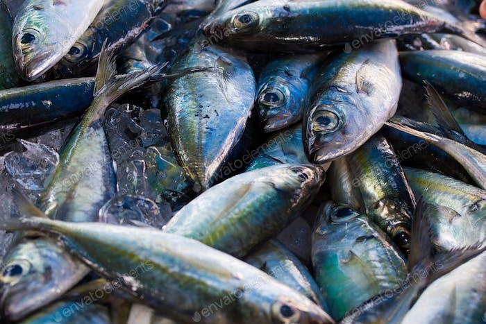 Chub mackerels, sea fish