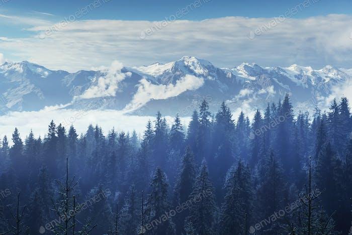 Bäume im Nebel und Wolken. Karpaten. Ukraine.  Europa
