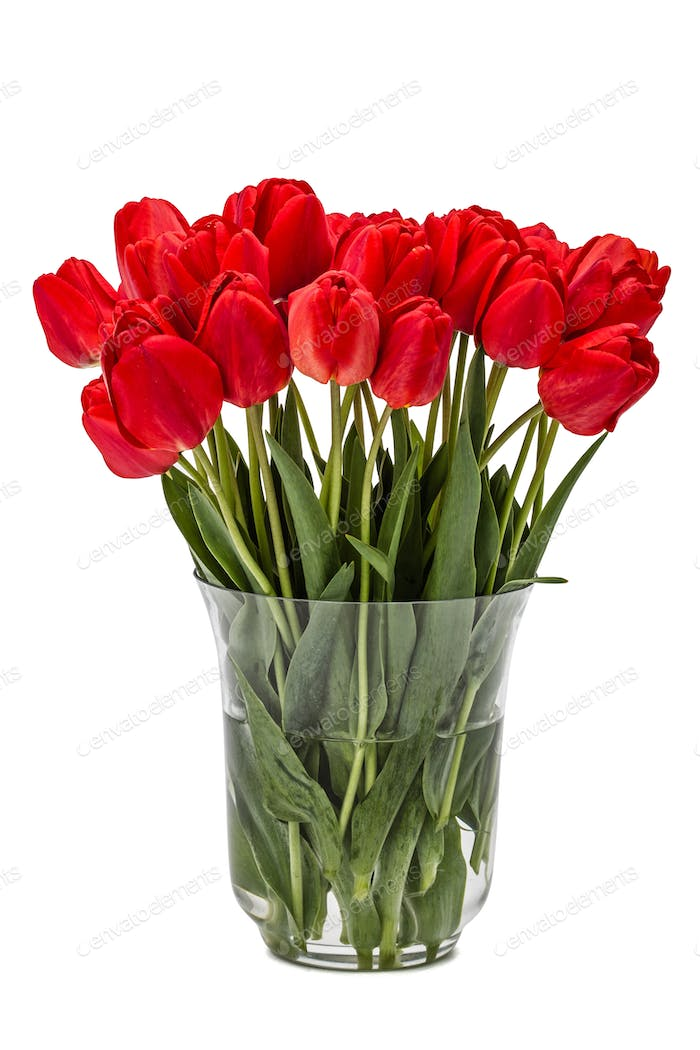 Bouquet of red flowers tulips in vase, isolated on white backgro