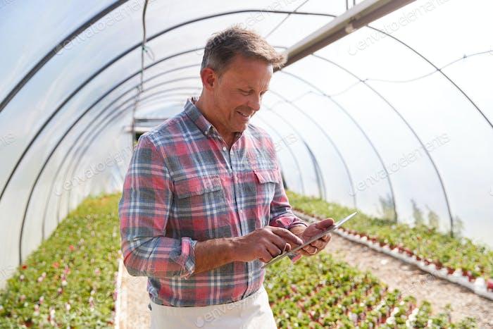Reifen Mann arbeiten in garten center gewächshaus halten digital tablet und überprüfen pflanzen