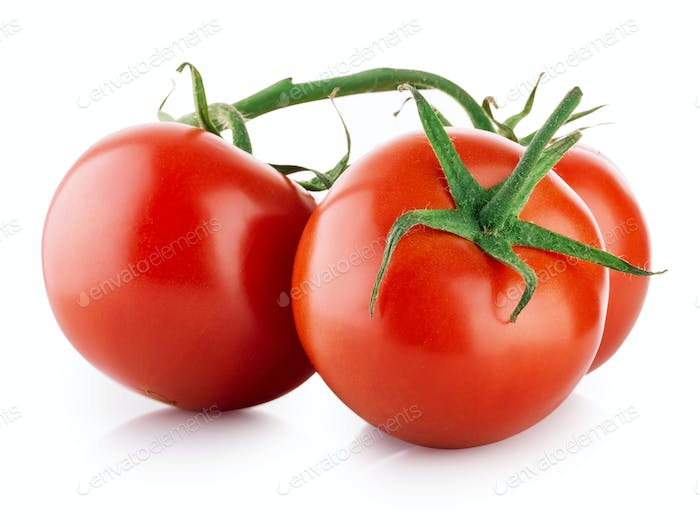 Branch of ripe tomatoes