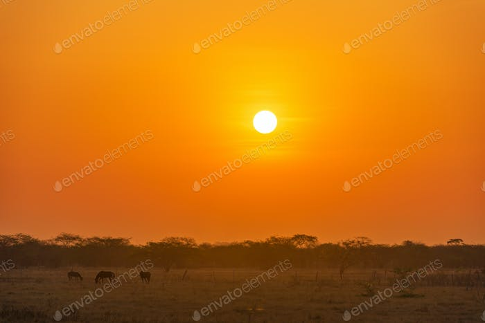 Sunrise on the Plains