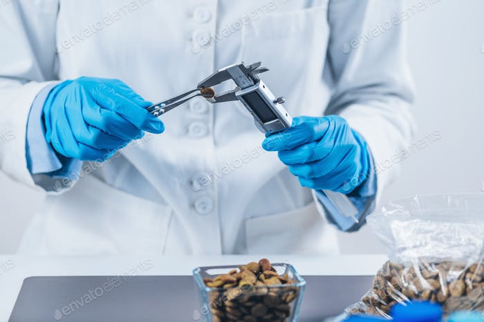 Pet Food Safety Test. Measuring Dry Pet Food Kibble with Caliper in Laboratory