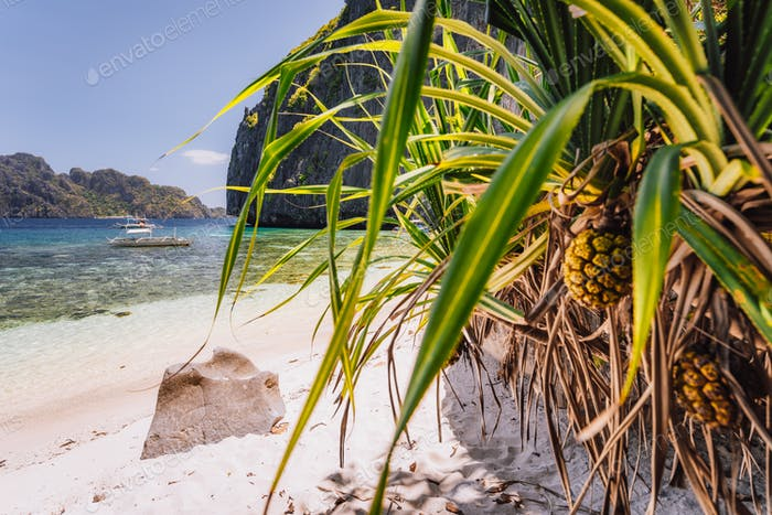 El Nido, Palawan, Philippines. Tropical sandy paradise beach with exotic foliage plants. Blue lagoon