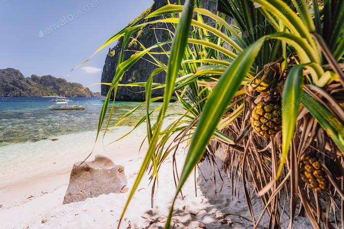 El Nido, Palawan, Philippines. Tropical sandy paradise beach with exotic foliage plants. Blue lagoon