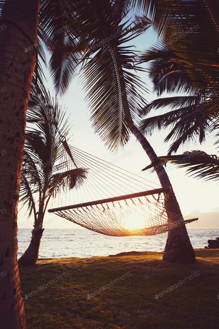 Tripical Hammock at Sunset