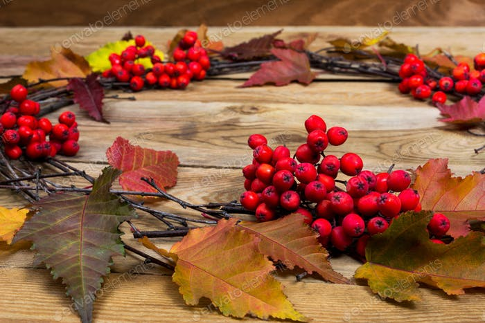 Fall wreath with leaves and rrowan berries on wooden background