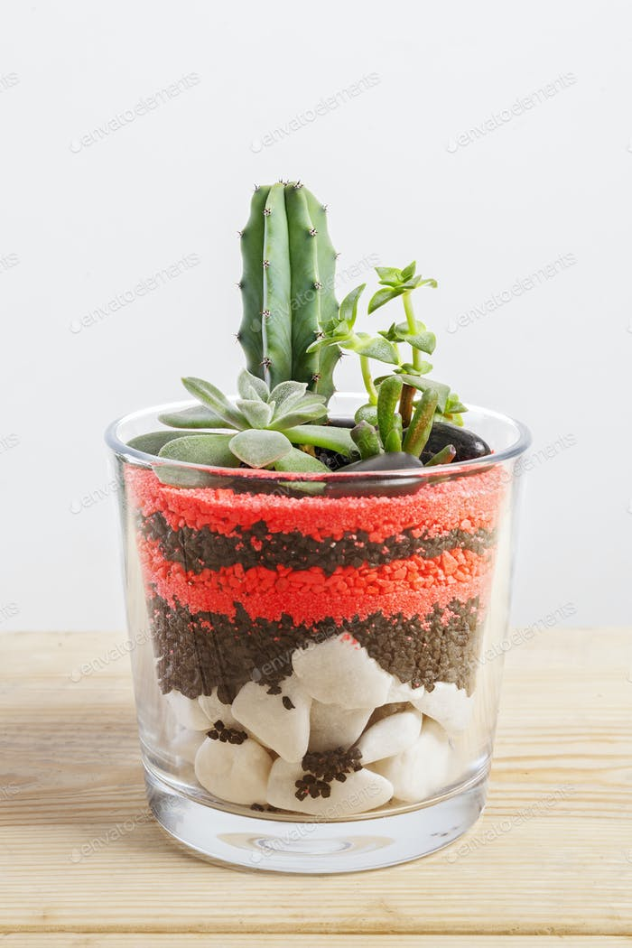 Succulent plants arrangement in a glass vase