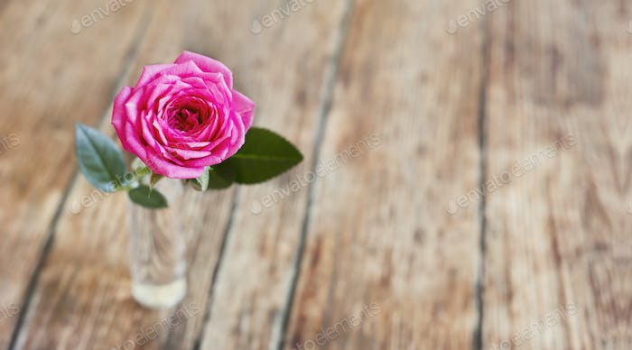 Pink rose flower on wooden background with blank, copy space