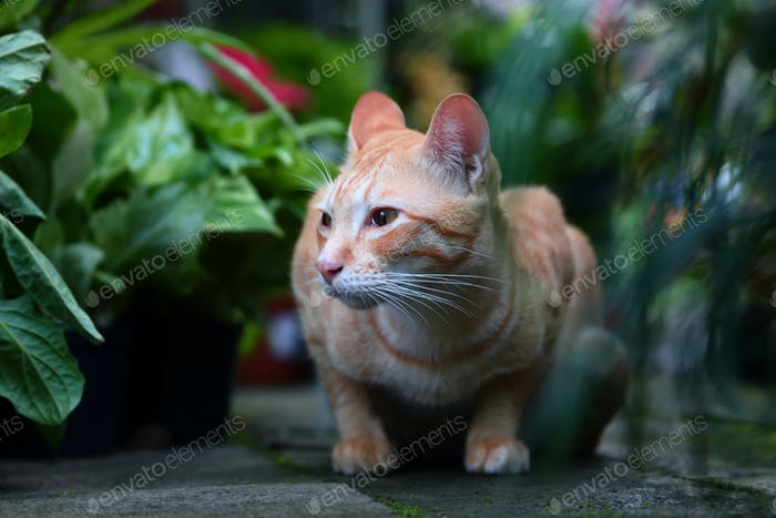 Adorable ginger cat in the garden