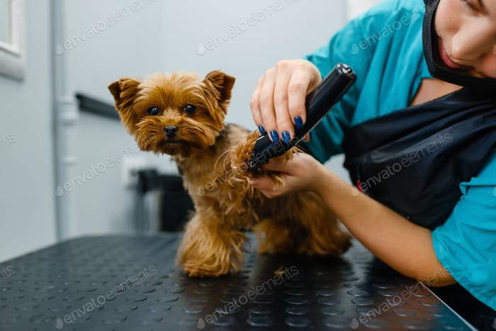 Groomer with polishing machine, grooming salon