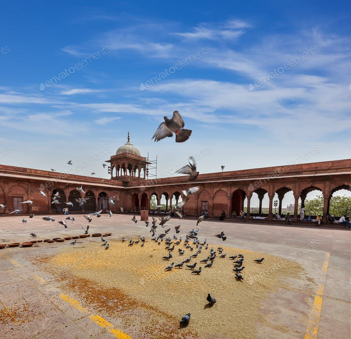Pigeons in Jama Masjid mosque