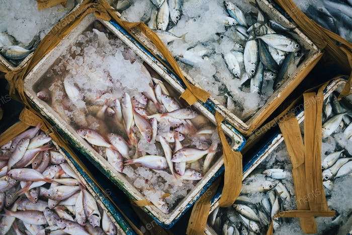 Hoher Winkel Nahaufnahme von Kisten mit kleinen Fischen auf Eis.