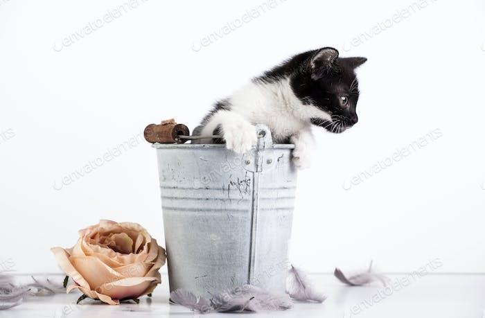 Kätzchen im Eimer