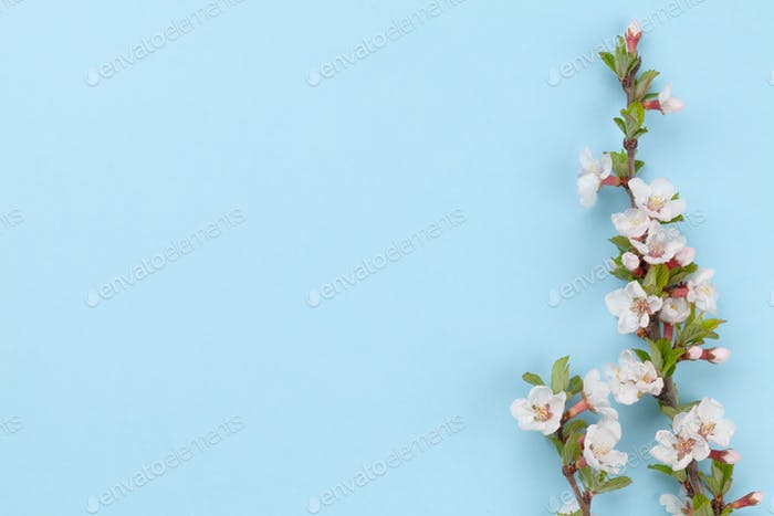 Kirschblüte auf blauem Hintergrund