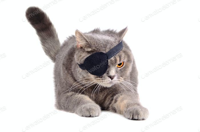 Angry pirate cat