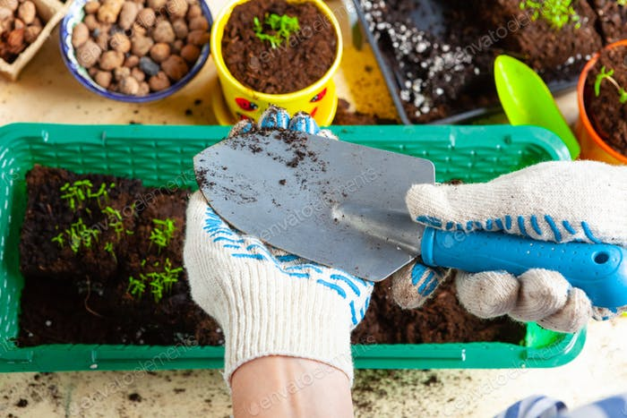Plant transplantation process close up. Gardening accessories