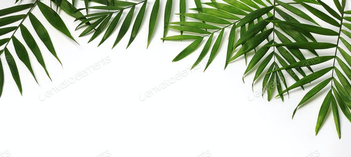 beautiful palm leaves