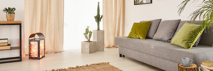 Living room with cactuses