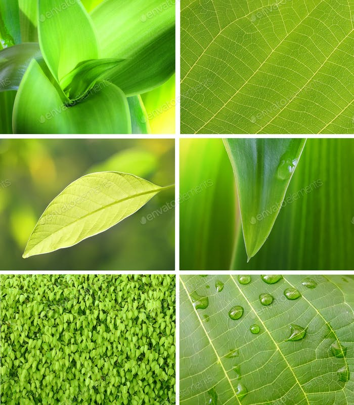 Collection of green leaf.