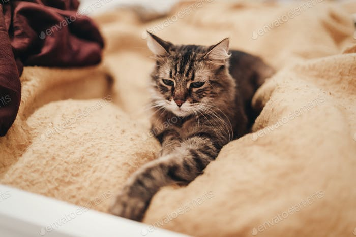 cute cat resting on yellow bed in stylish room